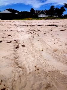 green-turtle-tracks