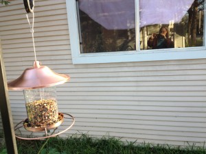 bird-feeder-sml