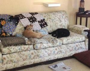 ck-reggie-couch-sml