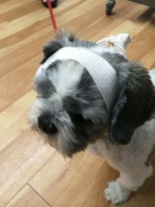 Chance-bandage