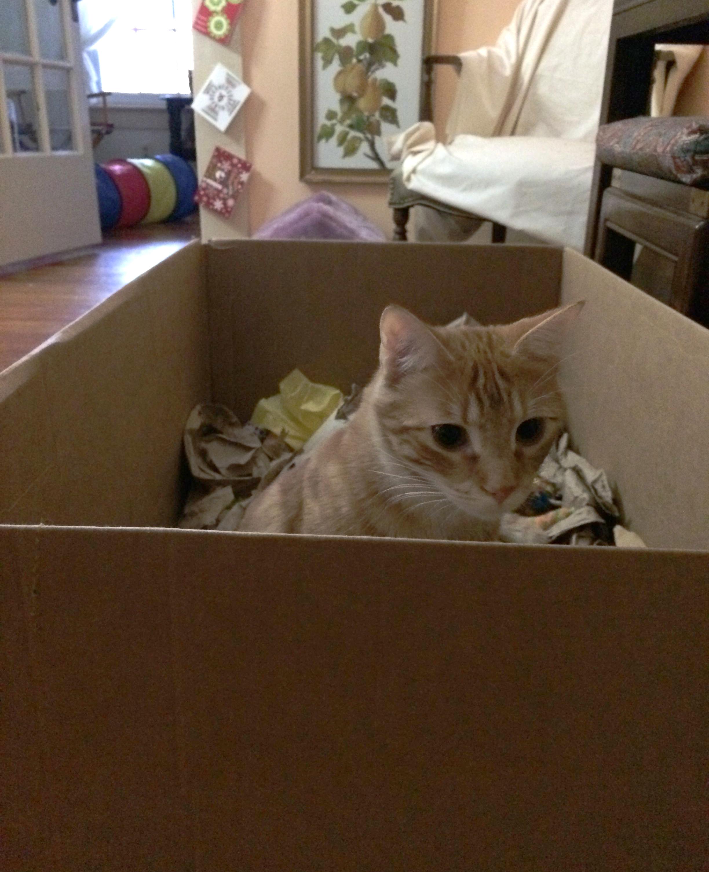 Brie-box