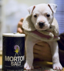 This tiny puppy, and the dog she will become, should be free to live with her family wherever they choose to live.