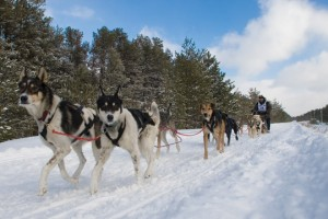 A sled dog team competes in the 2009 Upper Penninsula Sled Dog Championship.