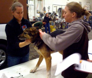 Vet check at the 2010 Yukon Quest.