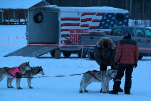 Sled dogs at a Yukon Quest checkpoint
