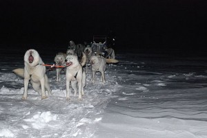 Alaskan huskies pull a sled at night. Photo by Pater McFly.
