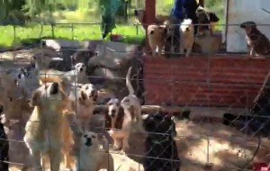 These dogs, and more, are getting assistance from ARF-Texas.