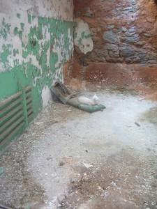 prison-cat
