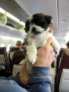 Puppy on a plane was originally published by Paul Shultz on flickr.com