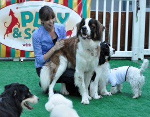 The doggy daycare crowd welcomed Victoria Stilwell at least as enthusiastically as the people did.