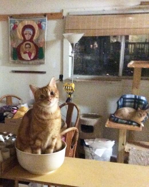 Cheddar-bowl