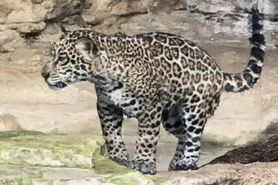 one-cub
